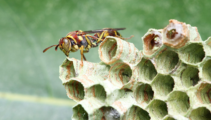 Melbourne FL Wasp & Bee Control